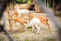 Zoo.  Fotografia Stock Libera da Diritti