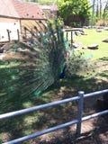 zoo Fotografia Stock Libera da Diritti