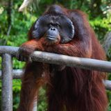zoo Royaltyfri Bild