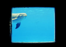 Zoo. Dophin in a sea aquarium Stock Image