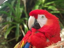 zoo Imagen de archivo libre de regalías
