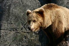 Zoo Royalty Free Stock Photos
