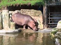 zoo Fotografía de archivo