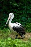 zoo imagem de stock royalty free