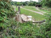 zoo Imagenes de archivo