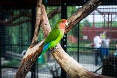 zoo Lizenzfreies Stockbild
