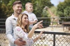 zoo lizenzfreie stockbilder