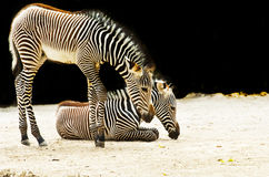 Zoo animal Stock Photo
