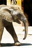 Zoo animal Stock Photography