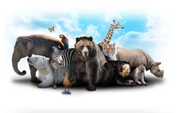 Zoo Animal Friends. A group of animals are grouped together on a white background. Animals range from an elephant, zebra, bear and rhino. Use it for a zoo or Stock Image