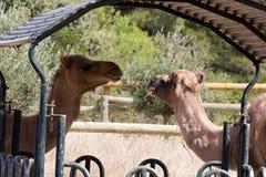 Zoo animal - La Barben - France Stock Images