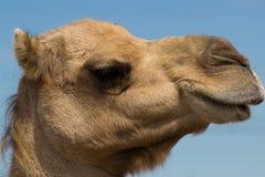 Zoo animal - La Barben - France Royalty Free Stock Images