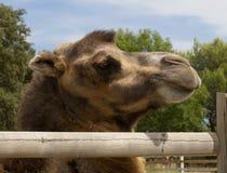Zoo animal - La Barben - France Royalty Free Stock Photography