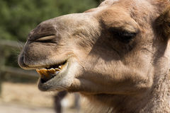 Zoo animal - La Barben - France Royalty Free Stock Photo