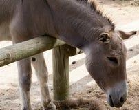 Zoo animal - La Barben - France Royalty Free Stock Photos