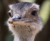Zoo animal - La Barben - France Stock Photography