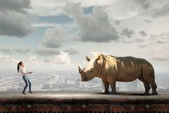 Zoo animal. Young scared woman holding rhino on rope Royalty Free Stock Images