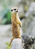 Zoo animals Stock Images