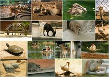 Zoo animals. Collage of various zoo animals images Stock Photos