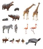 Zoo animals. Collage of african animals in front of white background Royalty Free Stock Photography