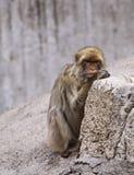 Zoo animals Royalty Free Stock Image