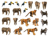 Zoo animals collection. Set including elephant, tiger cub, toucan, Eskimo dog stock illustration