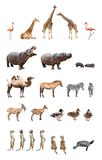 Zoo animals. Collection of the zoo animals isolated on the white background Royalty Free Stock Photography