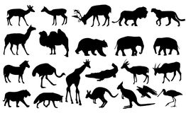Zoo animals collection. Zoo animals silhouettes collection - vector Royalty Free Stock Images