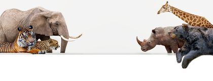 Zoo Animals Hanging Over Web Banner stock photos