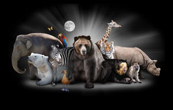 Zoo Animals at Night with Black Background. A group of animals are grouped together on a black background with glowing white rays. Animals range from an elephant Stock Photos
