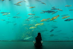 Zoo  Aquarium Alesund. Norway Stock Photography