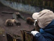 Zoo Stock Image