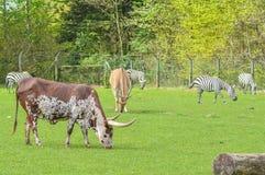 Zoo Stock Photos