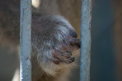 In a zoo cage. Monkey`s paw in a zoo cage Stock Photo