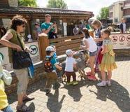 Zoo, chèvres et enfants de contact Photographie stock