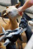 Zoo choyant Photos libres de droits