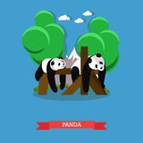 Zoo concept banner. Two panda bears taking a rest. Vector illustration in flat style design Stock Photos
