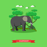 Zoo concept banner. Wildlife elephant animal. Vector illustration in flat style design Stock Photos