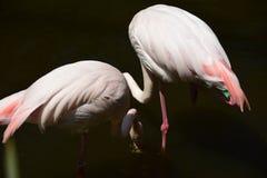 Zoo de Brousse, Turquie image stock