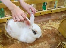 Zoo de contact Les mains de b?b? atteignent pour choyer l'animal familier photographie stock libre de droits