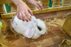 Zoo de contact Les mains de b?b? atteignent pour choyer l'animal familier photographie stock