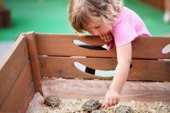 Zoo de contact, tortues dans des mains d'enfants Image libre de droits