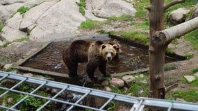 "Zoo de htäri de ""de Ã, Finlande Photographie stock libre de droits"