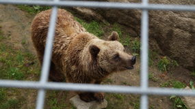 "Zoo de htäri de ""de Ã, Finlande Image libre de droits"