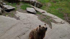"""Zoo de htäri de """"de Ã, Finlande Photos stock"""