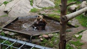 """Zoo de htäri de """"de Ã, Finlande Image stock"""