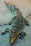 Zoo de la Thaïlande d'eau de mer de crocodile Images stock