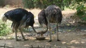 Zoo de Lucknow photo stock