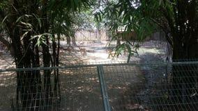 Zoo de Lucknow image libre de droits