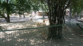 Zoo de Lucknow photo libre de droits